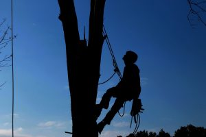 tree-service-1059484_1280