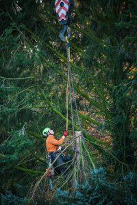 man tree service